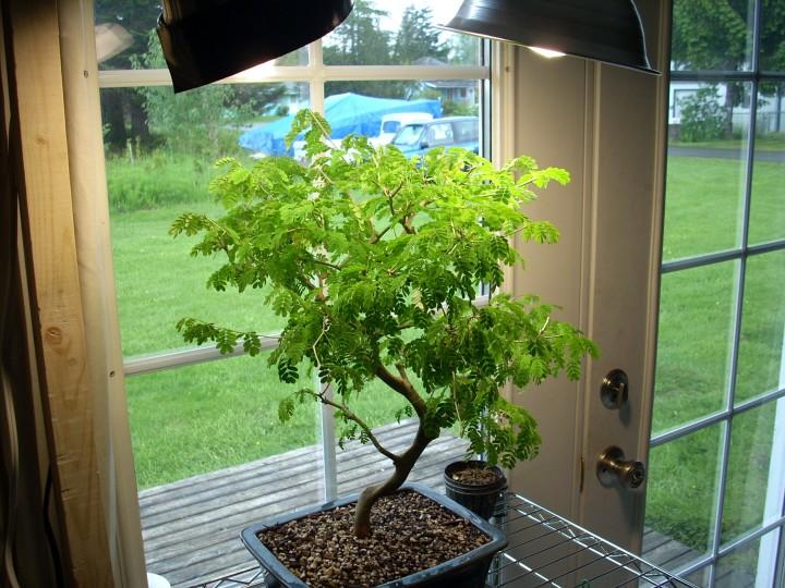 Illuminazione artificiale per cui le piante illuminazione di