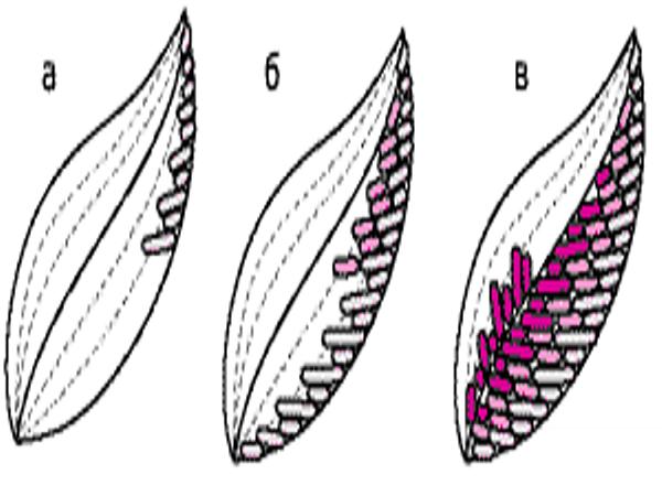 Ροζ μασάζ πορνό